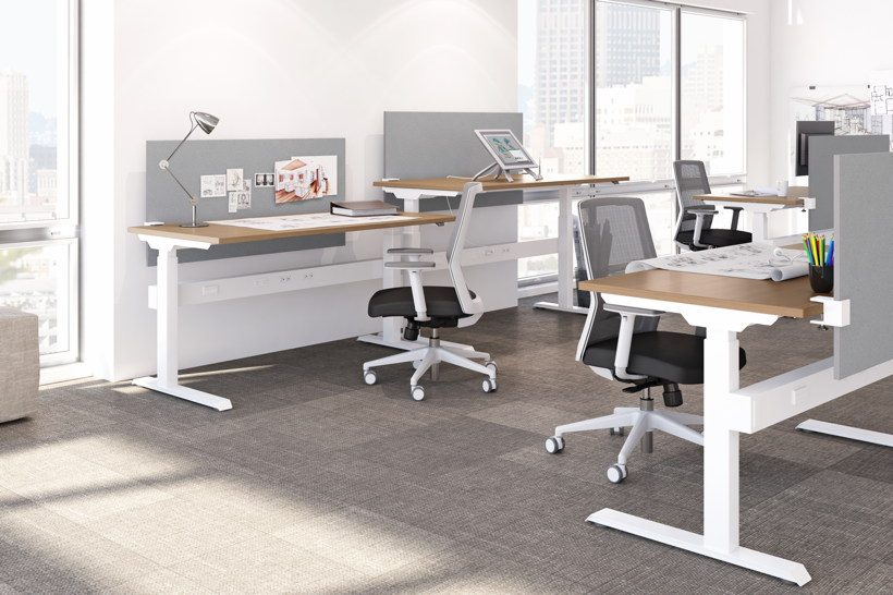 Adjustable height open office benching system with white legs and maple work surface